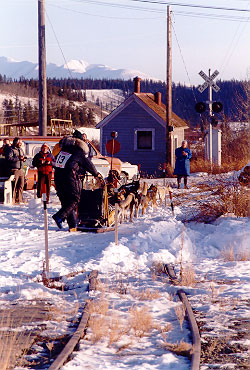 Sled Dog Team - Finishing Race